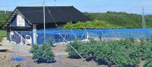 みづきブルーベリー 武藤農園