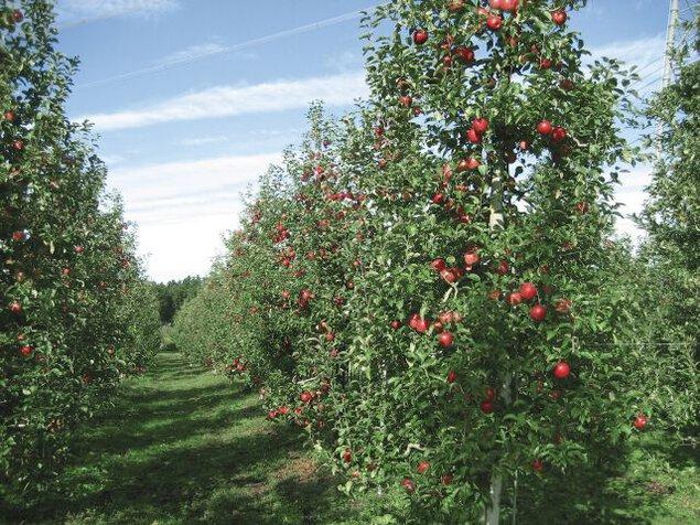 荒牧りんご園