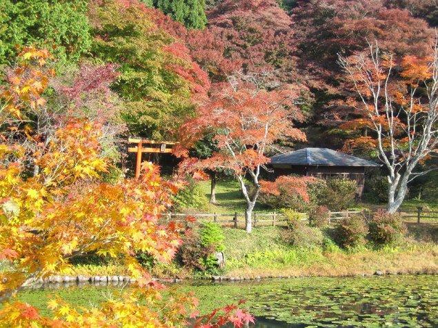 鳥見山公園の紅葉