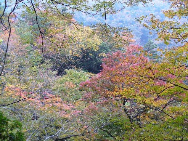 八斗蒔峠の紅葉