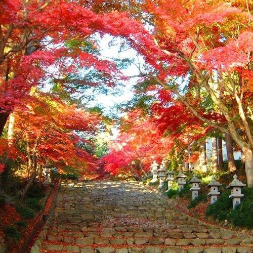 胡宮神社の紅葉
