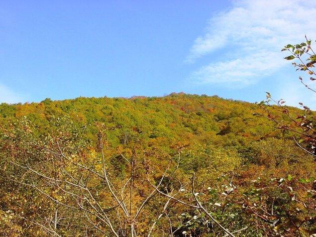 荒川高原の紅葉