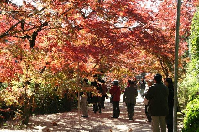 【紅葉・見頃】仁比山神社