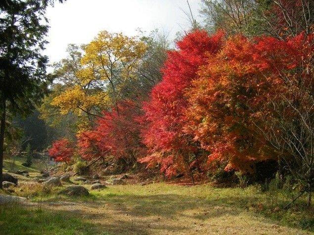 矢野温泉公園 四季の里 もみじ谷園の紅葉