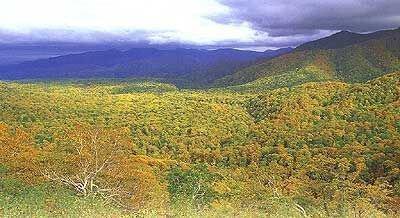 賀老高原ブナ原生林の紅葉