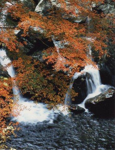 福知渓谷の紅葉