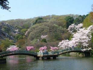 町田市立薬師池公園