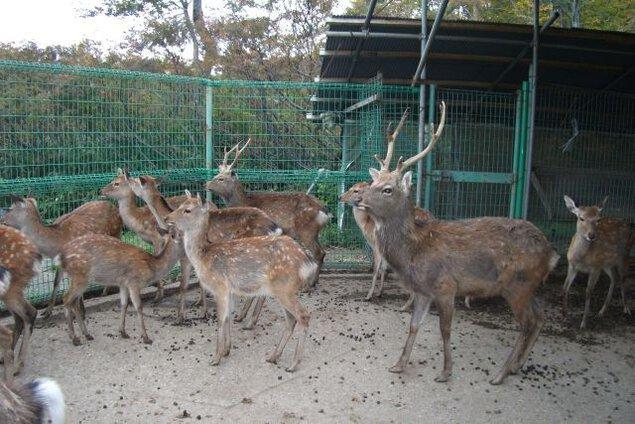 大平鹿公園