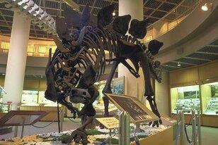 東北大学理学部自然史標本館(東北大学総合学術博物館)