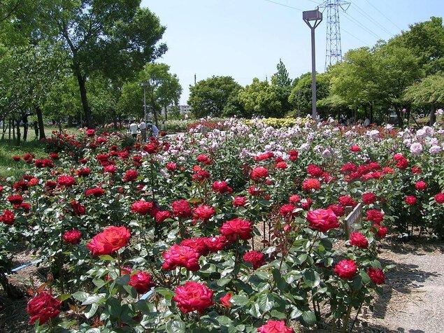 尼崎市農業公園