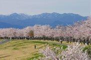 鬼怒川河川公園(氏家ゆうゆうパーク)