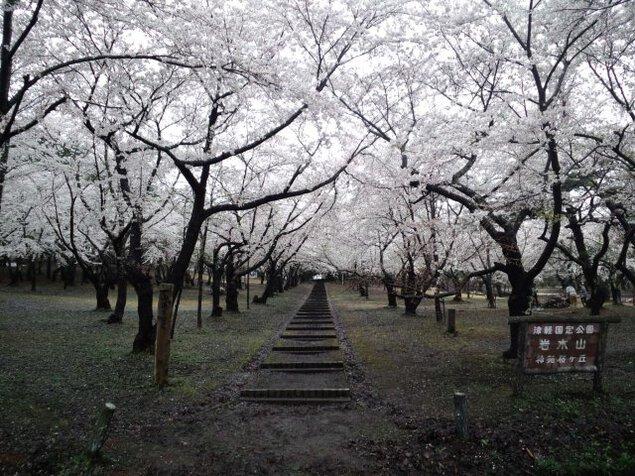 桜林公園キャンプ場
