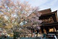 金峯山寺蔵王堂