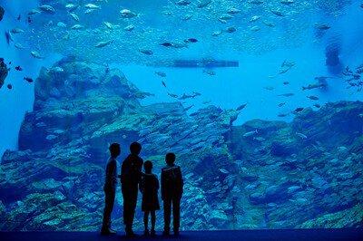 【一部休止】仙台うみの杜水族館
