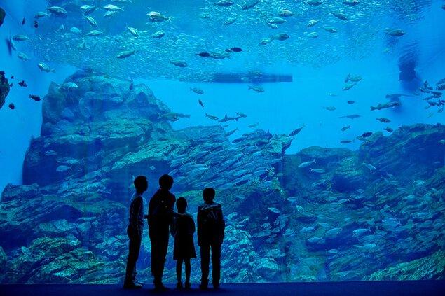 【事前購入制】仙台うみの杜水族館