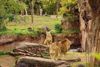 【一部事前予約制】天王寺動物園