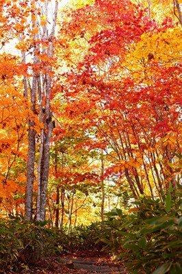 【休園】国営滝野すずらん丘陵公園