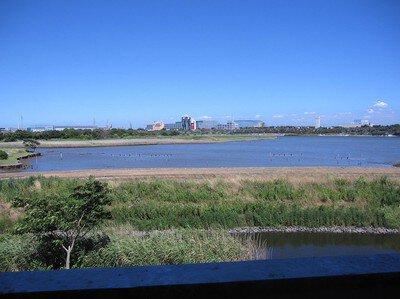 行徳鳥獣保護区(市川野鳥の楽園)