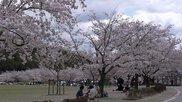 総合公園バンブー・ジョイ・ハイランド