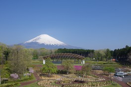 富士山 樹空の森