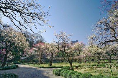 小石川後楽園【臨時休園】