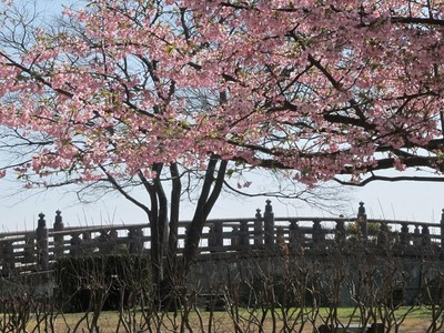 鹿児島県立石橋記念公園