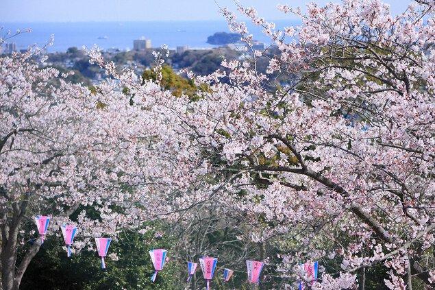 衣笠山公園