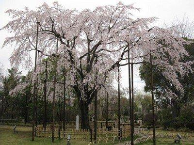 行船公園(平成庭園・源心庵・自然動物園)