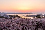 松島(西行戻しの松公園)