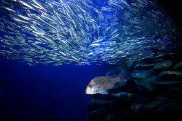 【営業時間短縮】マリホ水族館