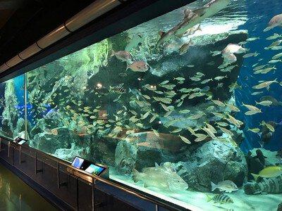 碧南海浜水族館
