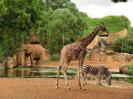 【一部開園】仙台市八木山動物公園