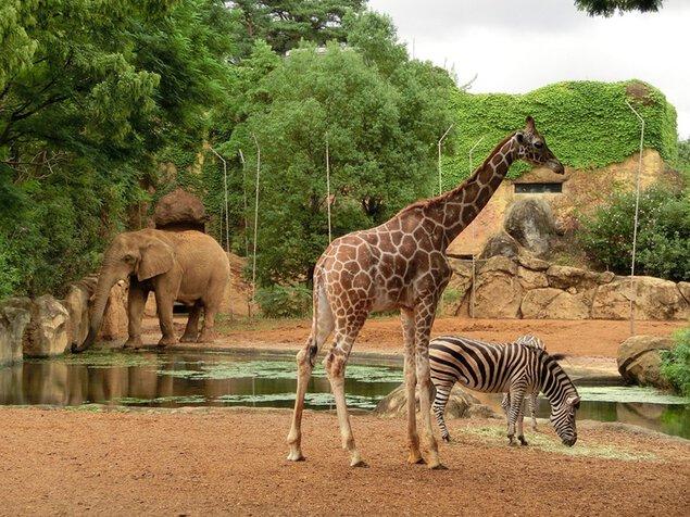 【一部休止】八木山動物公園フジサキの杜(仙台市八木山動物公園)