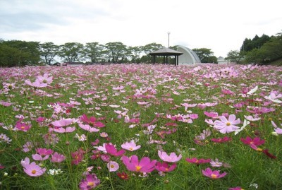 松山御本丸公園