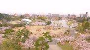 開成山公園