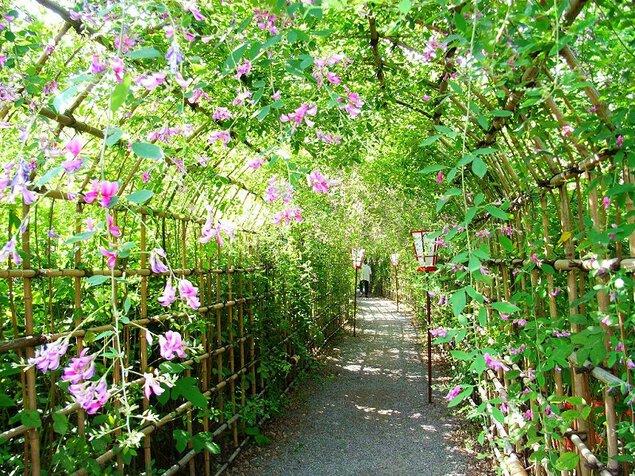 【臨時休園】向島百花園