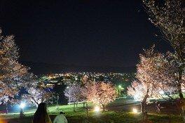 芦別市旭ヶ丘公園の桜(4/4)