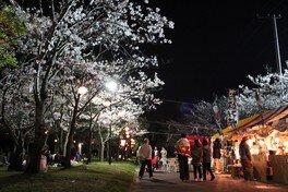 神之池緑地公園の桜 画像(2/2)