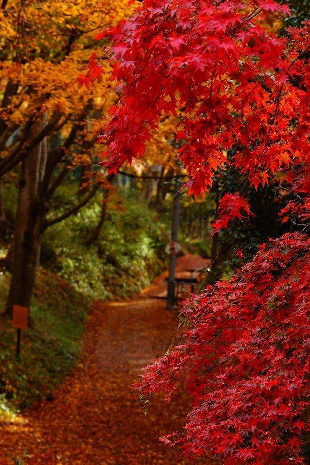 八瀬もみじの小径の紅葉