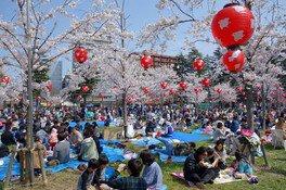 西公園の桜 画像(3/4)