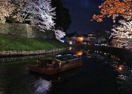国宝・彦根城の桜 画像(3/4)