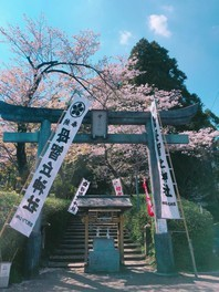 母智丘公園の桜 画像(3/5)