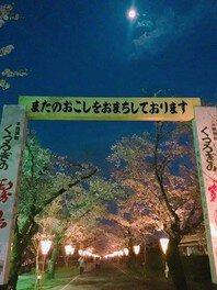 母智丘公園の桜 画像(4/5)