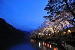 庄川水記念公園の桜 画像(2/2)