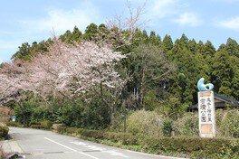 志乎・桜の里 古墳公園の桜 画像(2/5)