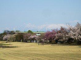 富山県中央植物園の桜 画像(2/4)
