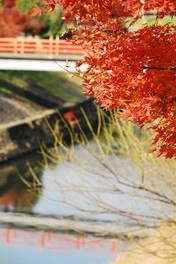 奈良県立竜田公園の紅葉 画像(3/4)