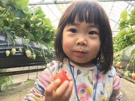 季節体験農場 花の海 いちご狩り 画像(2/4)
