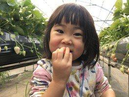 季節体験農場 花の海 いちご狩り 画像(4/4)