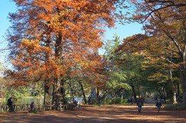 石神井公園の紅葉 画像(2/3)
